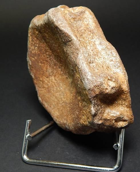 Bilde av Ryggvirvel fra fiskeøgle (Ichtyosauria sp.)