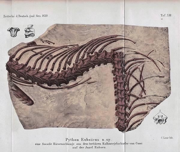 Bilde av Antikt trykk: Slange, trykk fra 1870