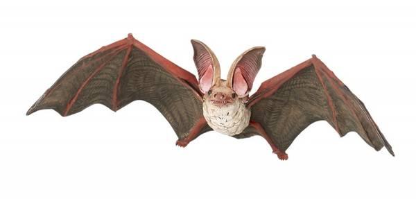 Bilde av Langøreflaggermus