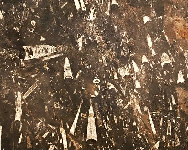 Bilde av Stor fossil blekksprutskallbordplate #1