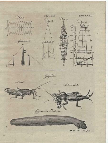 Bilde av Antikt trykk med elektrisk ål m.fl.