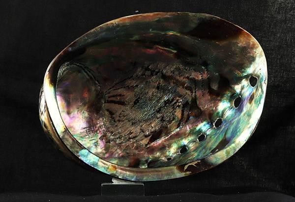 Bilde av Polert abaloneskjell