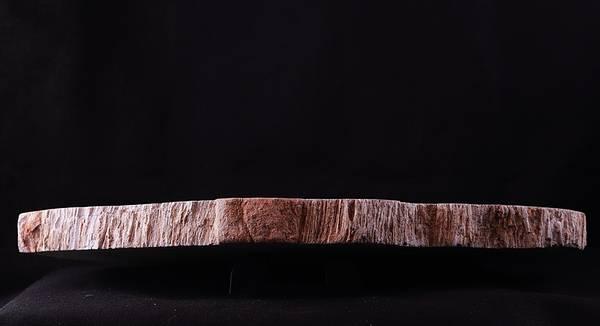 Bilde av Skive av fossil trebregne (Tietea singularis)