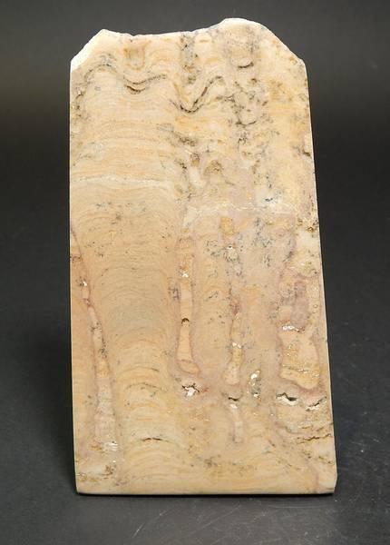 Bilde av Stromatolitt (Conophyton?), 600 mill. år