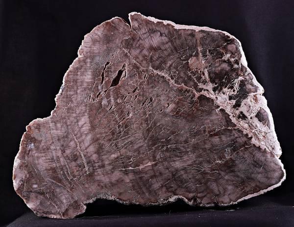 Bilde av Fossilt tre, Madagaskar