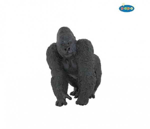 Bilde av Gorilla (Gorilla beringei)
