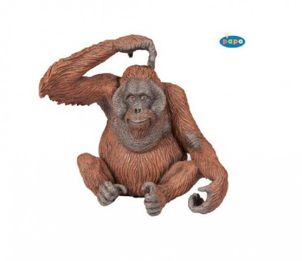 Bilde av Orangutang (Pongo sp.)
