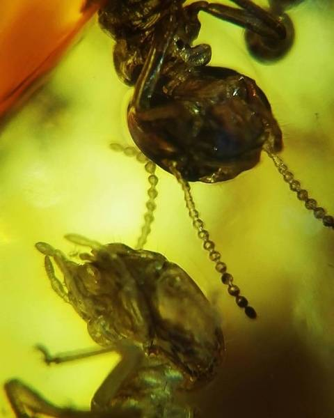 Bilde av Mikroskop til mobil (60x)