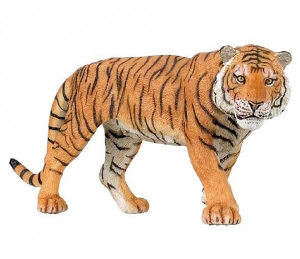 Bilde av Tiger (Panthera tigris)