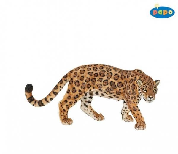 Bilde av Jaguar (Panthera onca)