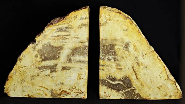 Bilde av Bokstøtter av fossilt tre fra Indonesia