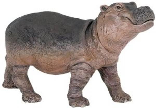 Bilde av Flodhestkalv (Hippopotamus amphibius)