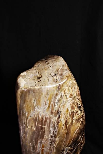 Bilde av Stor fossil trestubbe fra Indonesia