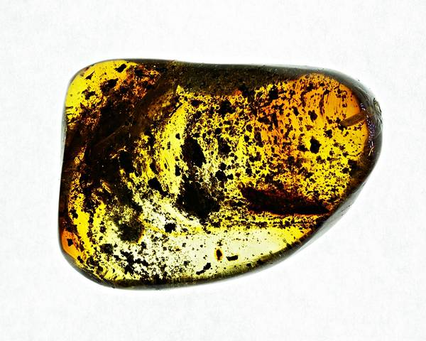 Bilde av Polert rav med insekter fra Chiapas, Mexico