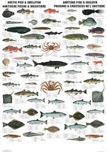 Bilde av Arktiske fisk og skalldyr - Plansje B70 x H100