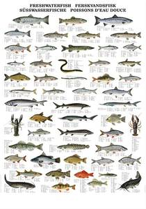 Bilde av Ferskvannsfisk - Plansje B70 x H100