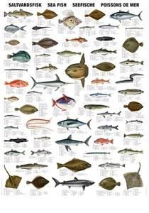 Bilde av Saltvannsfisk - Plansje B70 x H100