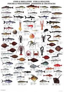 Bilde av Fisk og skalldyr - Plansje B70 x H100