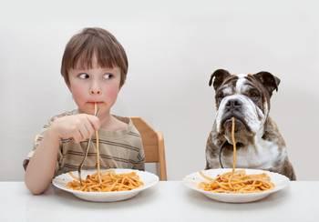 Bilde av Fullfor  til hunder