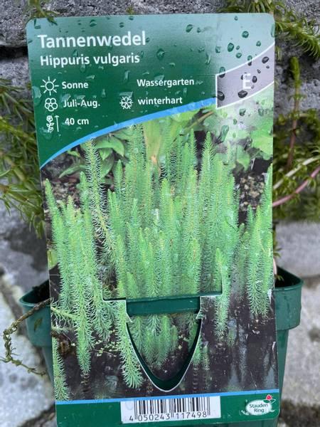 Hippuris vulgaris Hesterumpe