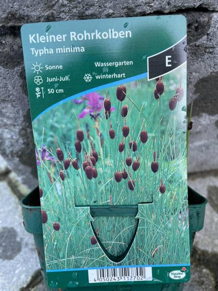 Typha minima, Mini dunkjevle