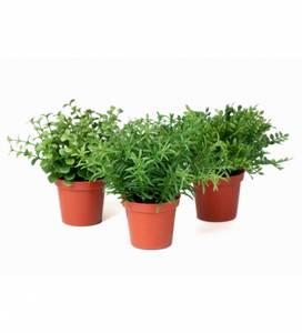 Bilde av Miniplanter