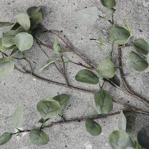 Bilde av Eucalyptus Natur