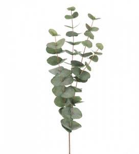 Bilde av Eucalyptus stilk 60 cm