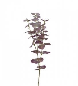 Bilde av Eucalyptus 75 cm Lilla