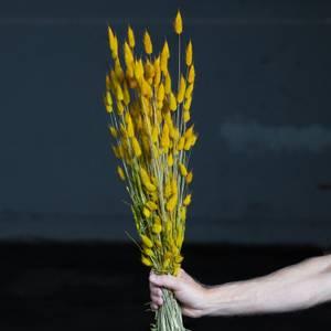 Bilde av Lagarus - Yellow