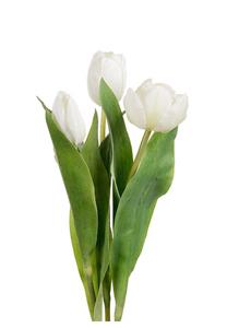Bilde av 3pk tulipaner Hvit