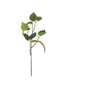 Bilde av Amaranthus 55 cm