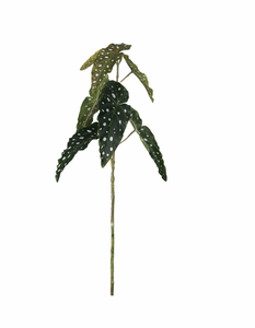 Bilde av Forell Begonia 80 cm
