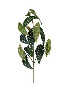 Bilde av Forell Begonia 120 cm