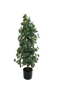 Bilde av Eucalyptus 100 cm