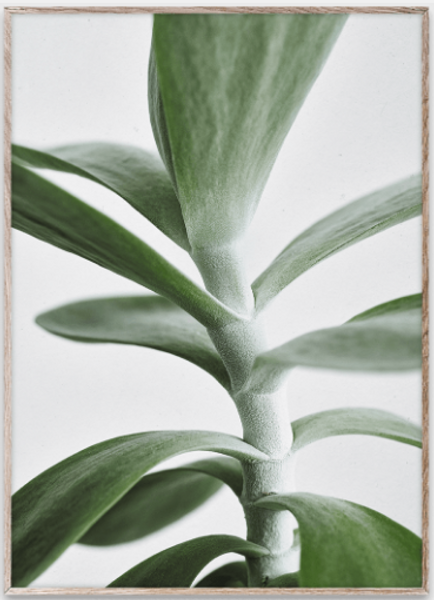 Bilde av Green Home 04 - 50 x 70 cm