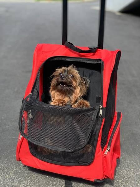 Bilde av Trillebag / ryggsekk til hund og katt