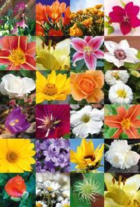 Bilde av DECOR Stickers Blomsterparadis, 3 ark (10 pakk)