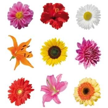 Bilde av Blomstermotiver