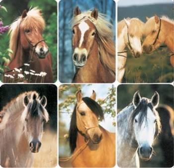 Bilde av Hester