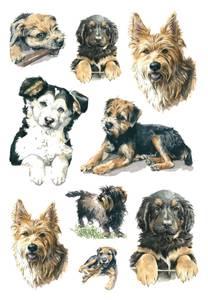 Bilde av DECOR Stickers Hunder, 3 ark (10 pakk)