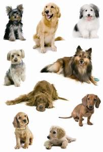 Bilde av DECOR Stickers Hundefoto, papir, 3 ark (10 pakk)
