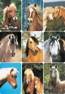 Bilde av DECOR Stickers  Hestehoder, 3 ark (10 pakk)