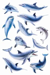 Bilde av MAGIC Delfiner, folie med paljetter (Jewel), 1