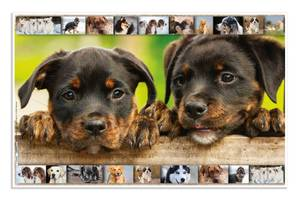 Bilde av Skriveunderlag i kartong, 550 x 350 mm, Hunder (3