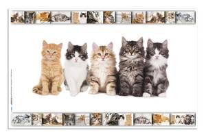 Bilde av Skriveunderlag i kartong, 550 x 350 mm, Katter (3