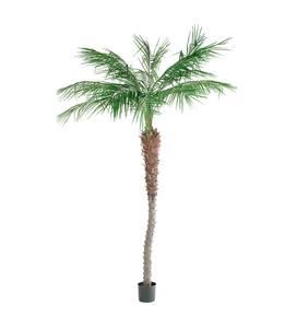 Bilde av Phoenix palme 210 cm