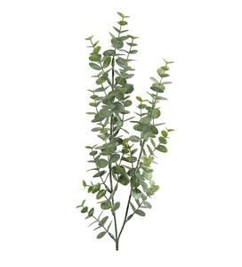 Bilde av Eucalyptus (74 cm)