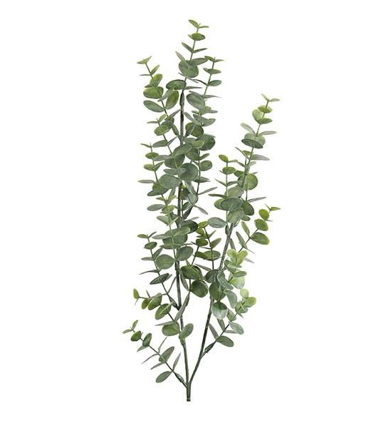 Eucalyptus (74 cm)