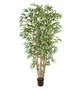 Bilde av Bambus (210 cm)